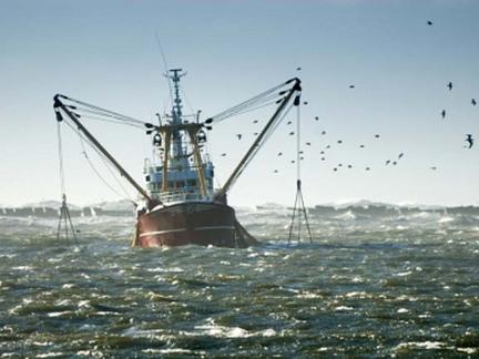 mmw_fishery_article